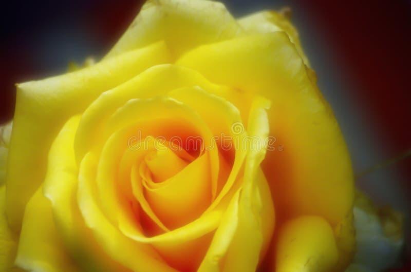 黄色上升了与orton作用 库存照片