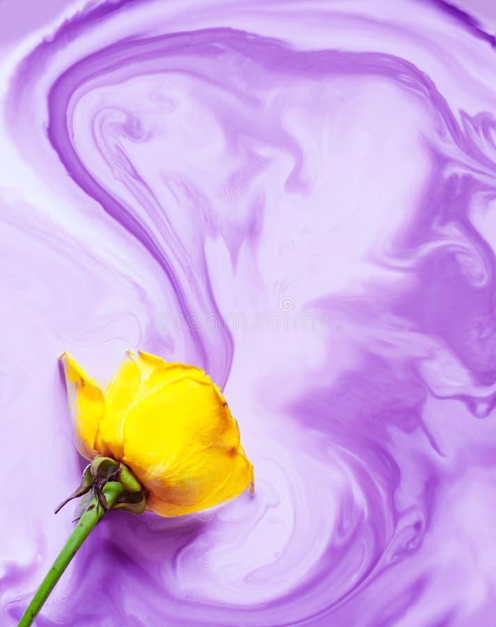 黄色上升了在水白色背景颜色丙烯酸酯的水下的油漆墨水染料里面在烟黑紫罗兰色淡紫色淡紫色紫色下 库存图片