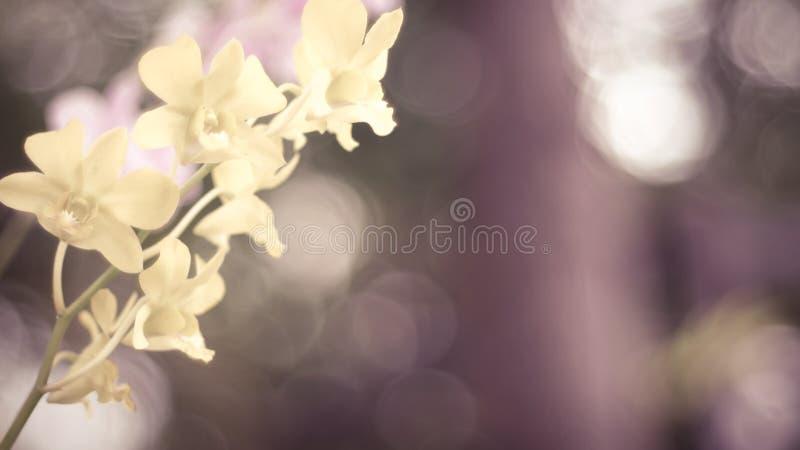 黄色兰花花 绿色自然迷离bokeh背景 库存照片