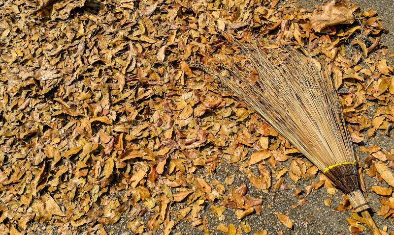 黄色叶子和帚柄 免版税库存照片