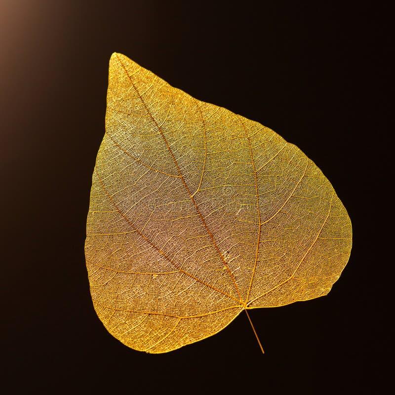 黄色叶子宏观照片在黑背景的与拷贝空间 美好的自然布局 平的位置 免版税库存图片