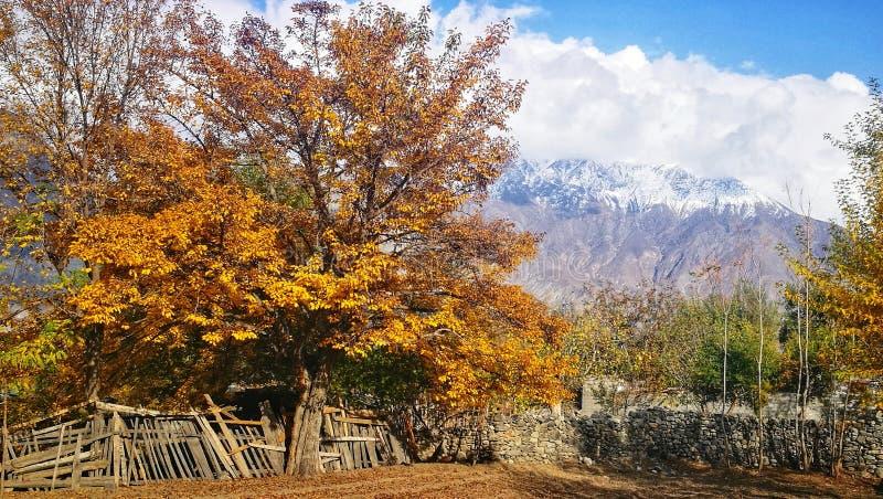 黄色叶子秋天风景在有雪山和天空蔚蓝的乡村在汉萨,在巴基斯坦北部 免版税库存图片
