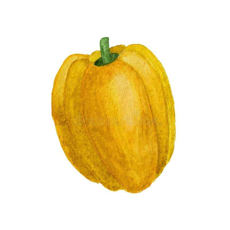 黄色喇叭花胡椒在白色背景隔绝的水彩例证 免版税库存图片