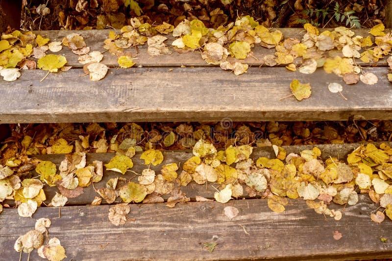 黄色在花岗岩步离开城市公园 库存照片