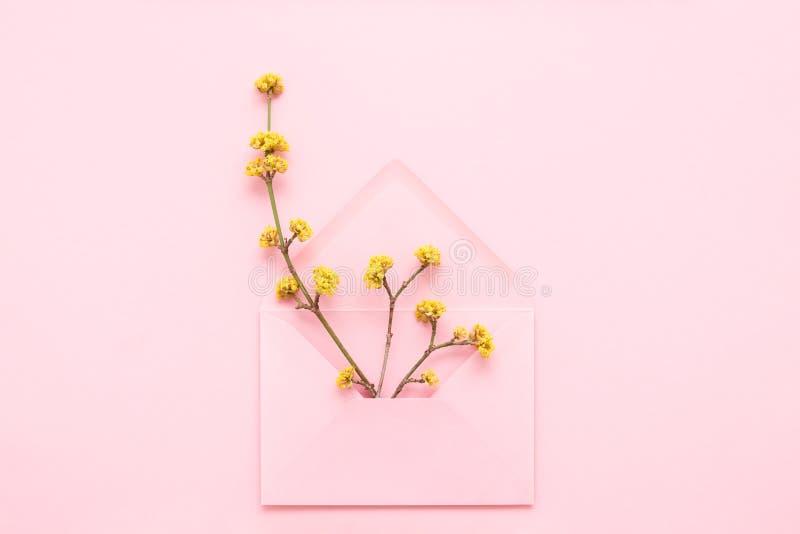黄色开花在桃红色背景的桃红色信封分支 免版税库存照片