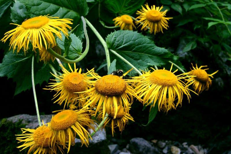 黄色开花花束