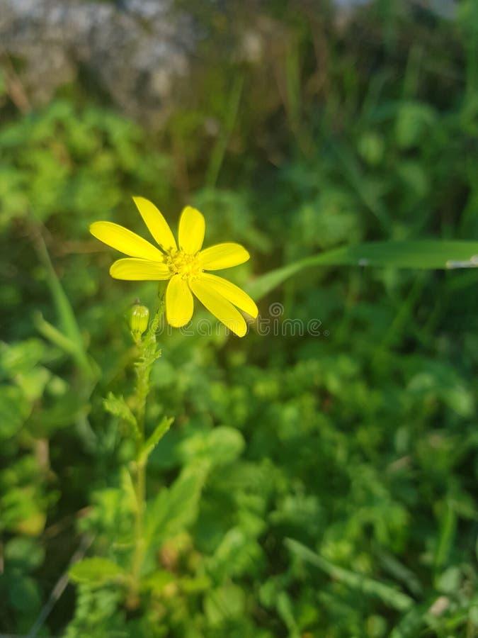 黄色森林花 库存图片