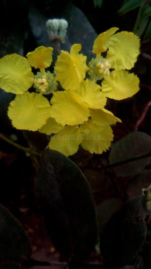 黄色狂放的三朵花 库存照片