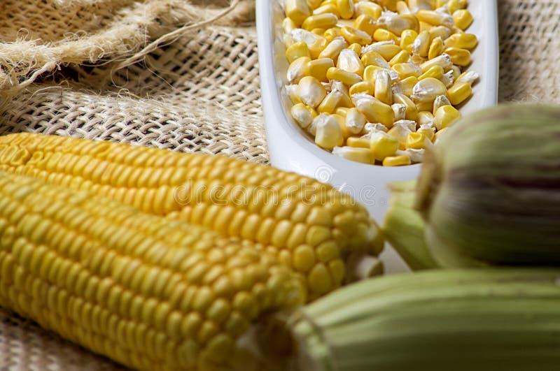 黄色玉米的玉米耳朵与五谷的在一个白色碗-玉蜀黍属5月 库存图片
