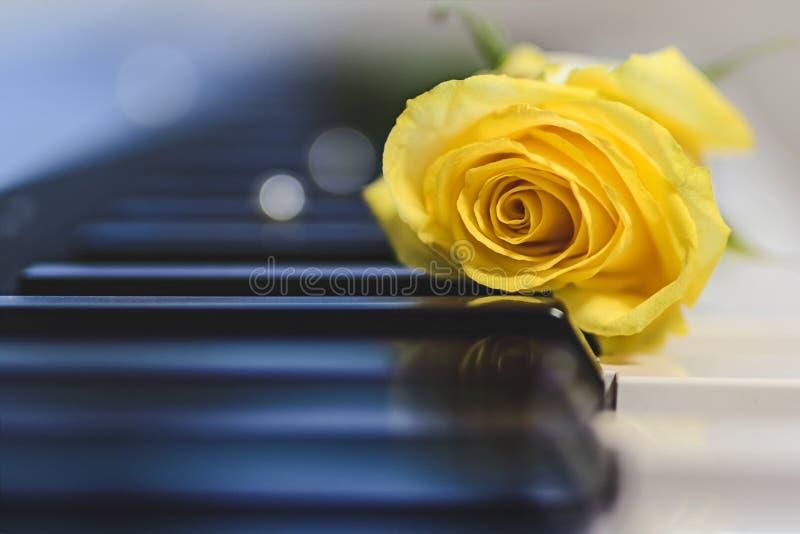 黄色玫瑰和钢琴,软的迷离背景 免版税库存图片