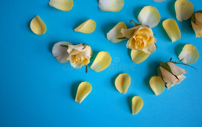 黄色玫瑰花瓣 库存图片