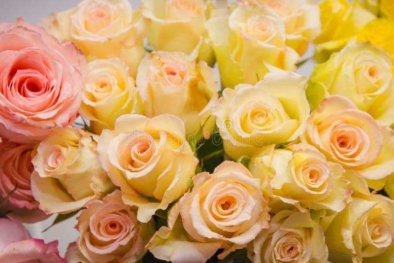 黄色玫瑰 它是很多黄色玫瑰 库存照片