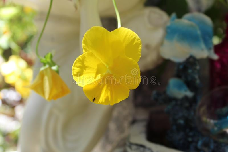 黄色的木兰门 免版税库存照片