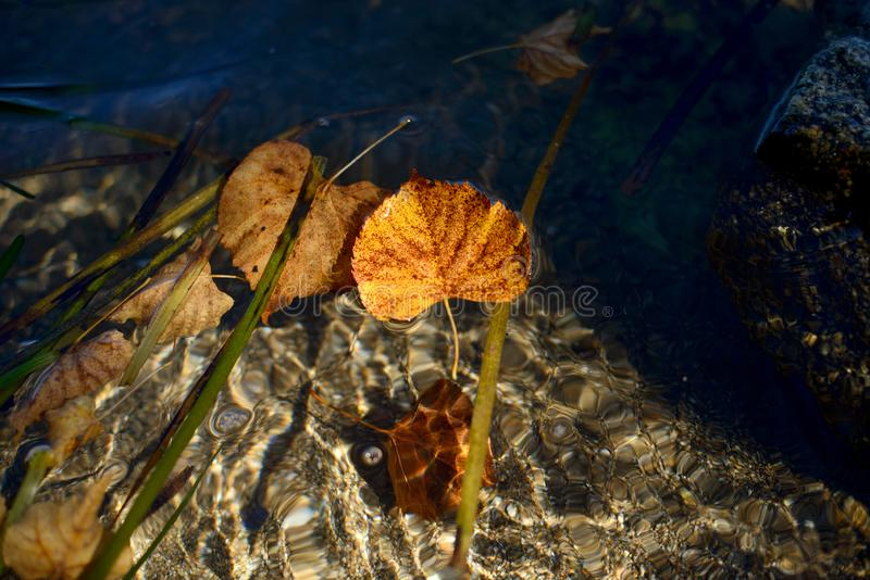黄色秋叶和石头在海水海岸线 库存图片