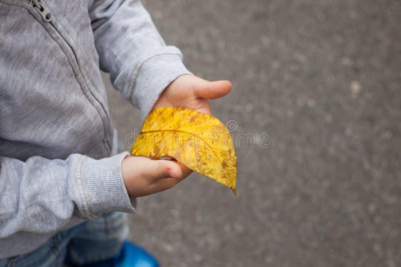 黄色秋叶在手上 拿着一片叶子的男孩在一个公园在秋天期间 免版税库存图片
