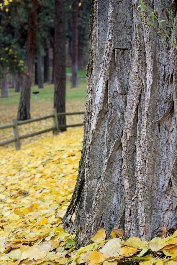 黄色秋天叶子围拢的树干 库存照片