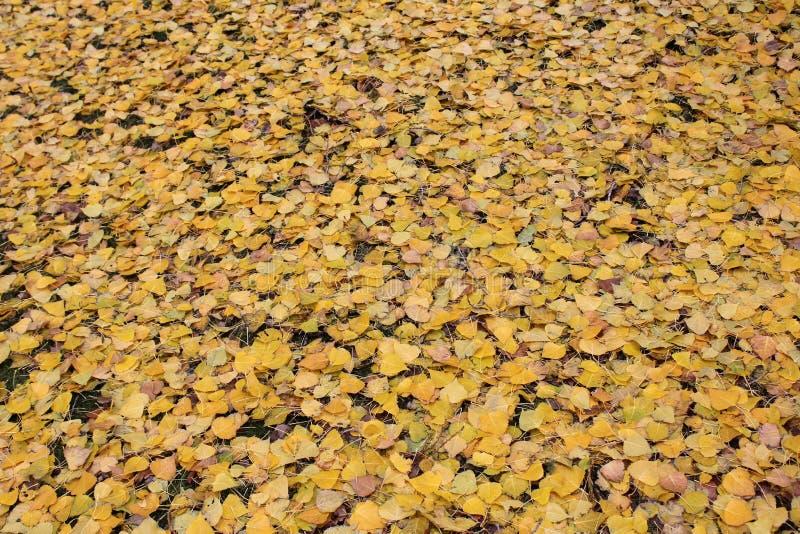 黄色秋天叶子织地不很细背景  免版税图库摄影