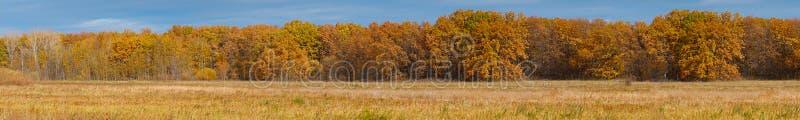 黄色秋天森林的全景在草甸前面的 免版税库存图片