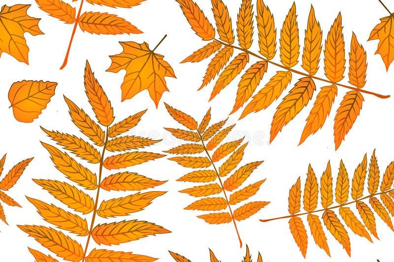 黄色红色和橙色的秋叶 背景秋天无缝样式的板料 织品的样式 蕨印刷品 趋向秋天 向量例证