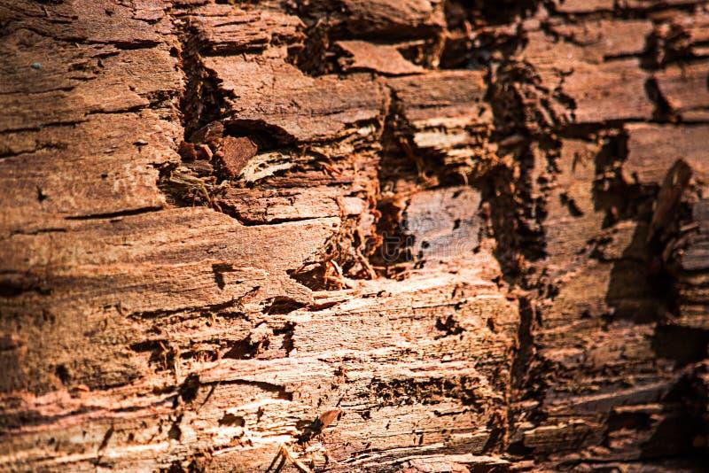 黄色腐烂的木头,软的焦点纹理  免版税库存图片