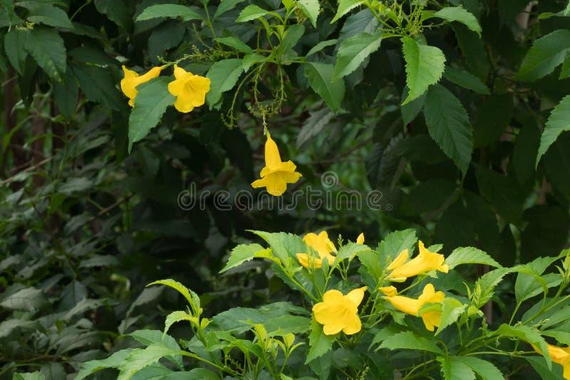黄色花以绿色 库存图片