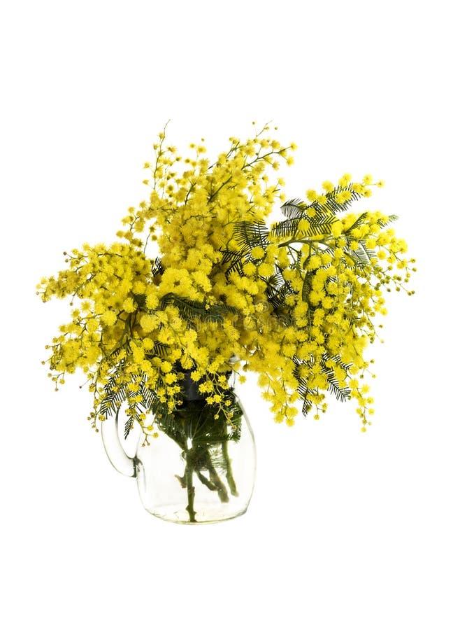 黄色花含羞草金合欢树 图库摄影