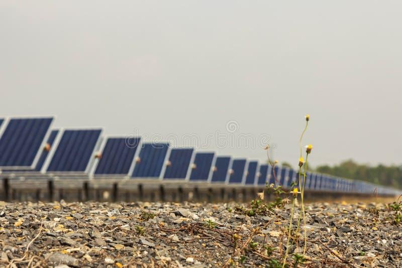 黄色花和岩石与太阳电池板,供选择的电来源,能承受的资源的概念 免版税库存照片