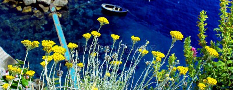 黄色花和蓝色海洋 库存图片