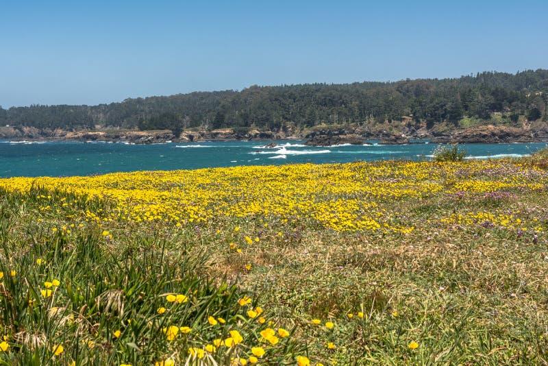 黄色花沿海, Mendocino,加利福尼亚 免版税库存照片