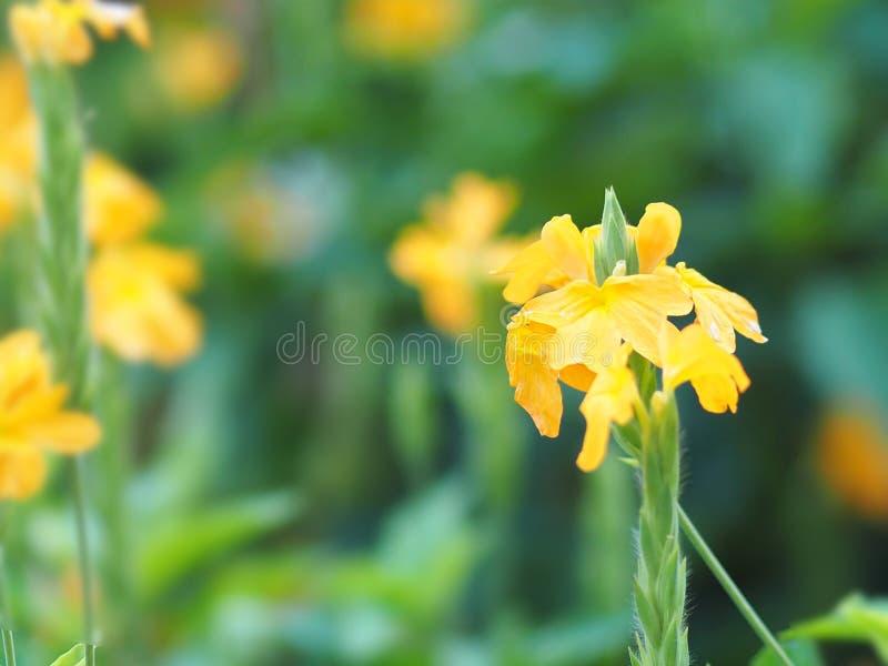 黄色花美丽在自然空间为写道 免版税库存图片