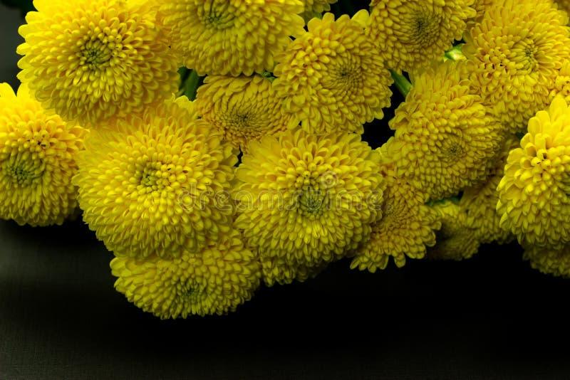 黄色花背景  黄色菊花宏观照片 免版税库存图片