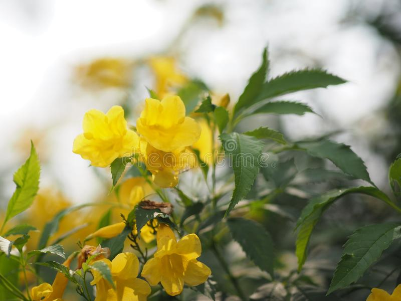 黄色花迷离自然背景空间为写道 库存图片