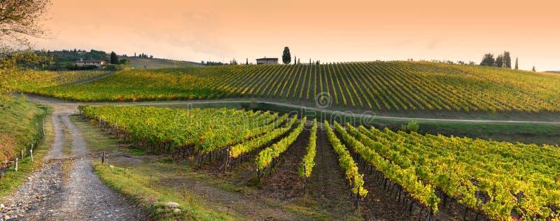 黄色葡萄园行日落的在佛罗伦萨附近的吉安迪地区在色的秋天季节期间 托斯卡纳 库存图片