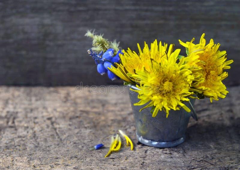 黄色蒲公英和蓝色穆斯卡里花在一个小桶在老木背景 花束开花弹簧 库存图片