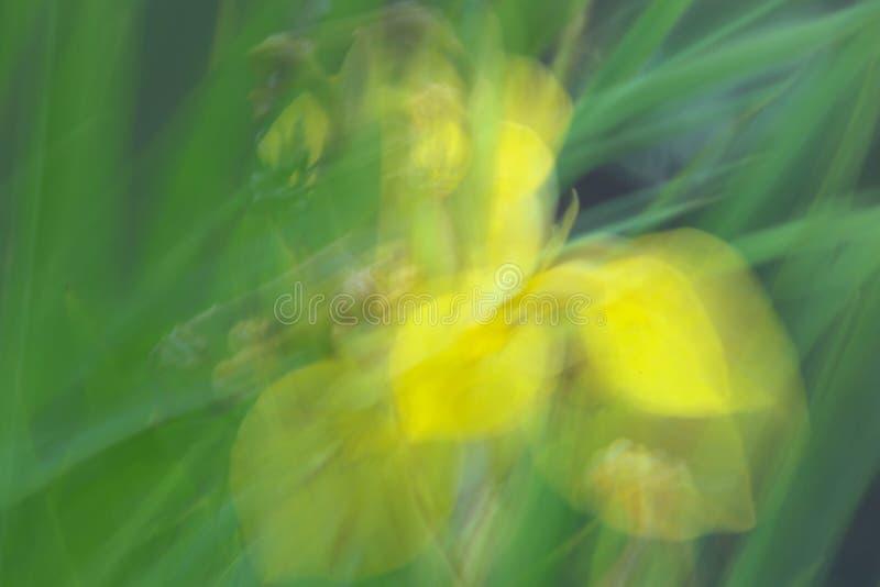 黄色虹膜摘要 库存照片