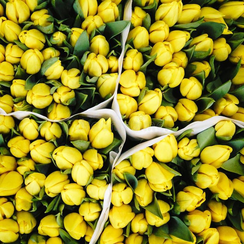 黄色郁金香在阿姆斯特丹花市场上  免版税库存图片