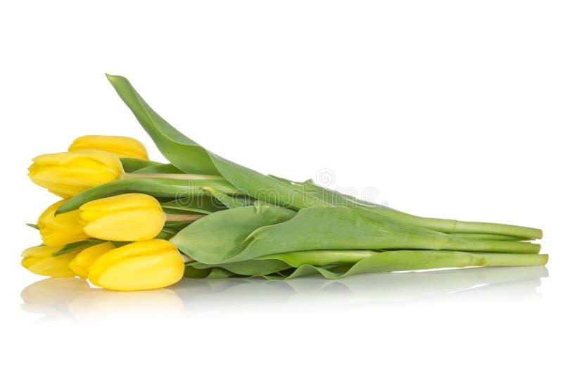 黄色郁金香花束在白色的 免版税库存图片
