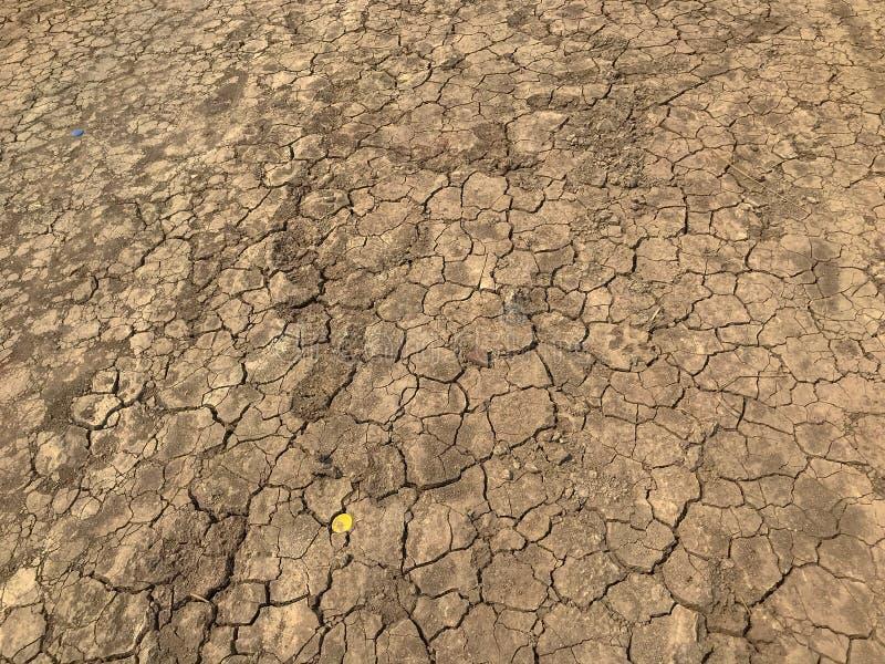 黄色高明的干燥土背景纹理 库存照片