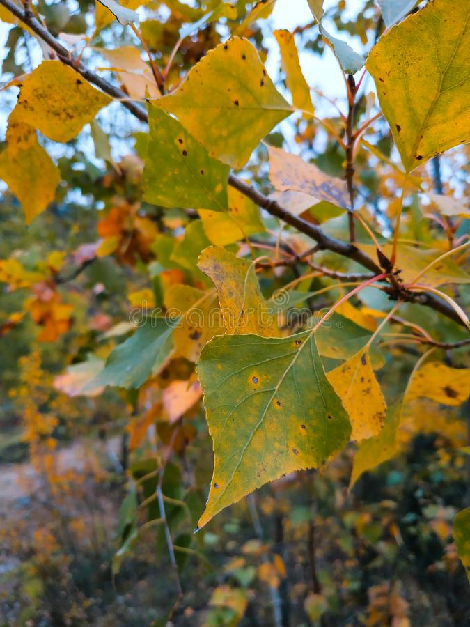 黄色,桔子,金黄,绿色森林叶子或叶子 自然在秋天 在秋季的树 免版税库存照片