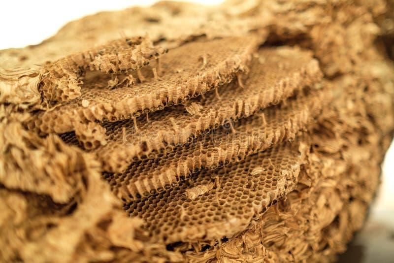 黄蜂的巢细胞细节 库存图片