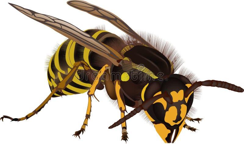 黄蜂 向量例证