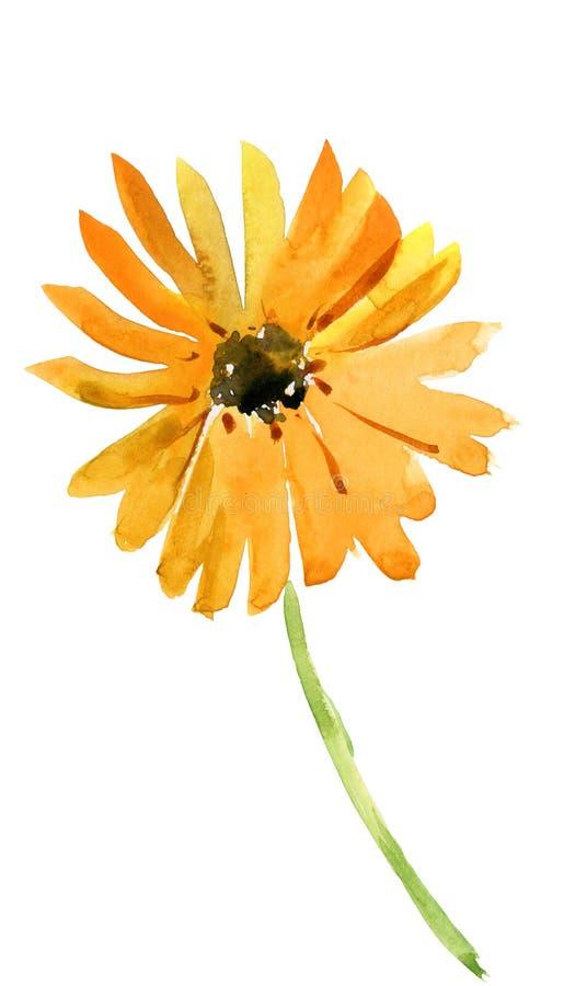 黄金菊构成 黄色春黄菊 花背景 免版税库存照片