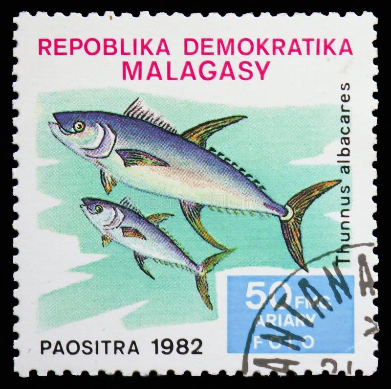 黄鳍金枪鱼(金枪鱼类albacares),鱼serie,大约1982年 免版税库存照片