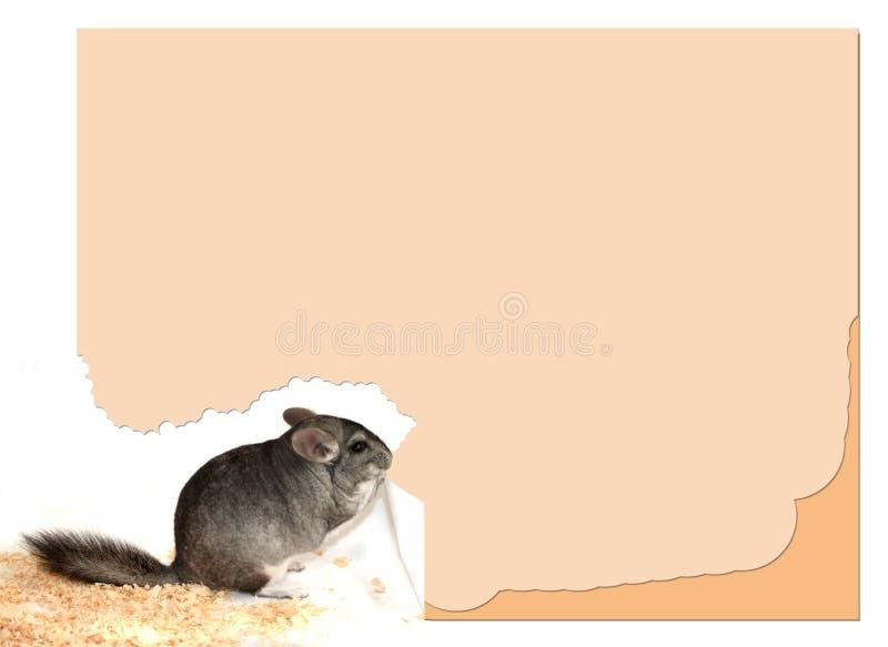 黄鼠符号 图库摄影