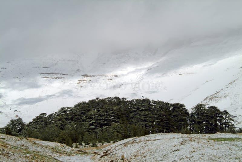 黎巴嫩雪松在Bcharre北部的圣所在黎巴嫩 图库摄影