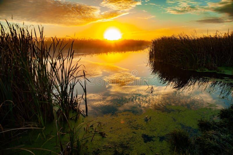 黎明捕鱼早晨河 免版税图库摄影