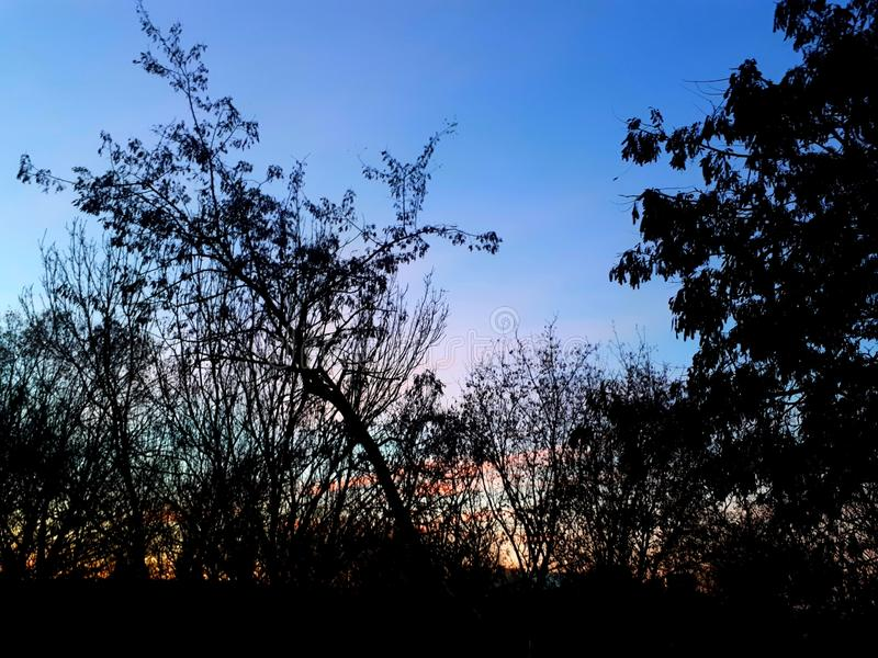 黎明桃红色云彩 库存照片
