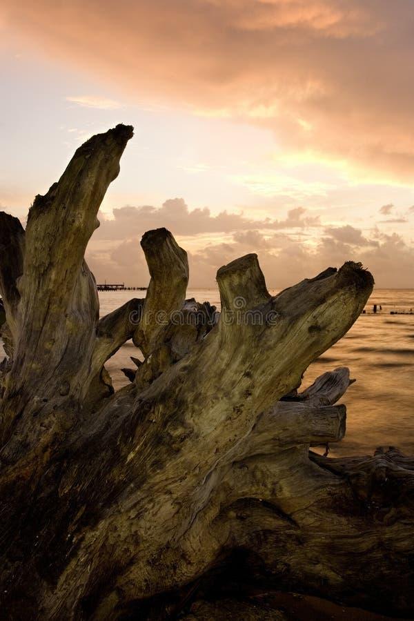 黎明漂流木头 库存图片