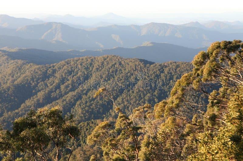 黎明雨林 免版税库存图片
