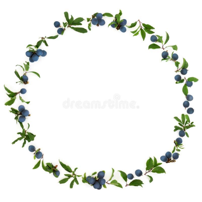 黑刺李莓果花圈 库存图片
